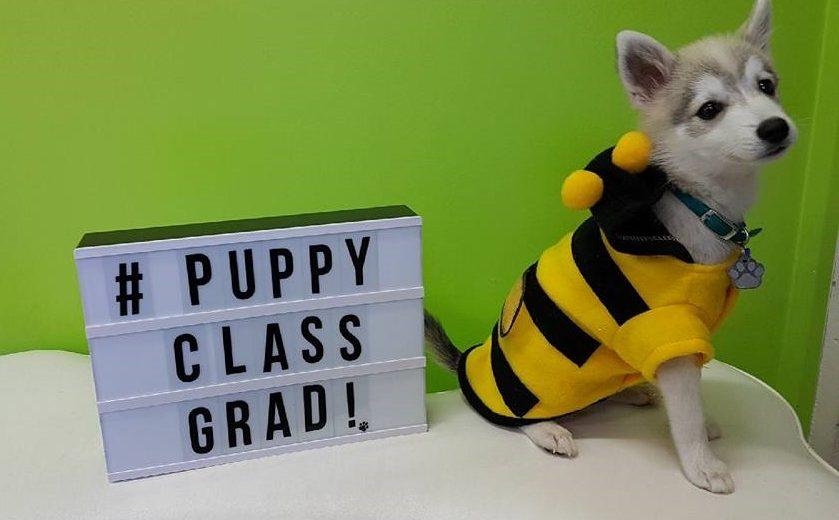 Puppy class Graduation